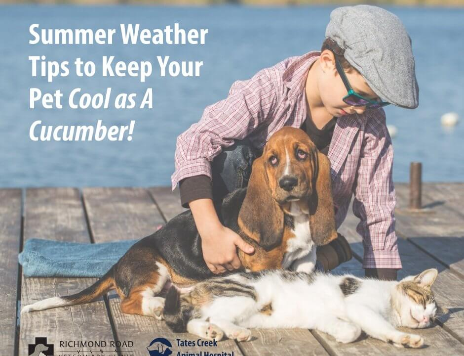 Keep Your Pets Cool