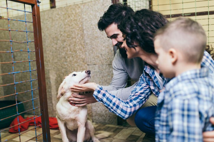 Importance of Fostering Pets